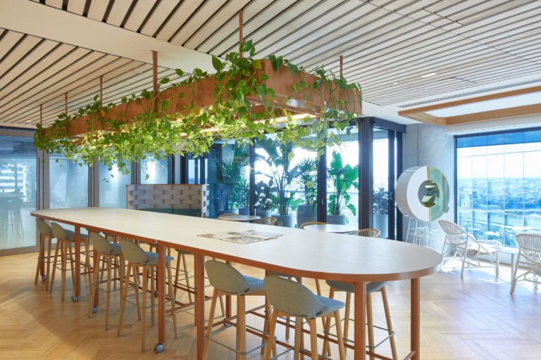 Professional photo of Deloitte Brisbane's staff kitchen, with trailing Pothos hanging from the kitchen table lighting fixture. Representing our indoor plant hire services.